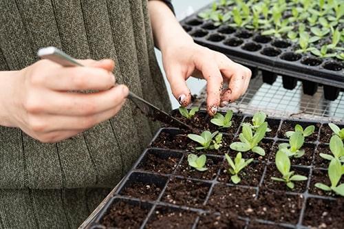 Cerdys, horticulteur et pépiniériste choisit Yuto et RiaShop